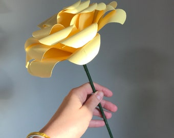 Jumbo Roses!