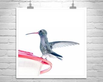 Hummingbird Art Photography, Bird Art, Hummingbird Picture, Bird Print, Gift for Birder, Bird Lover Gift, Hummingbird Print