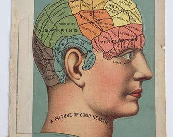 Cross-section Illustrations of Human Head