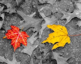 Autumn Leaves Red and Yellow Fine Art Print - Nature, Botanical, Wildlife, Garden, Nursery Decor, Home Decor, Baby, Zen, Gift