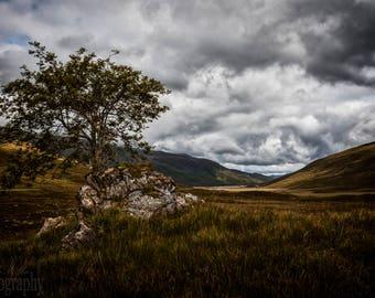 Glen Shiel - Valley, Tree, Moody, Scotland, UK, Landscape, Nature, Hills, Scottish Scenery Highlands, Fine Art Photography