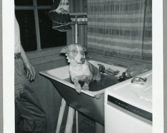 Vintage 60s Snapshot, Bath Time!  Dog in a Wash Tub, Photo #166