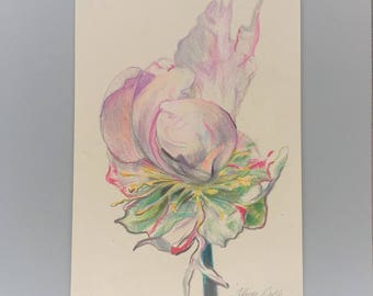 Pink peony flower colored pencil drawing framed