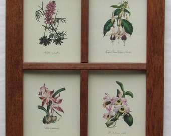 Set of 4 vintage botanical prints framed - nature, gardening, vintage prints, botanical prints