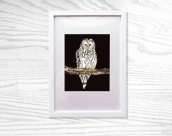 Limited Edition Owl Fine Art Print