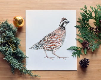 Northern Bobwhite Quail, Fine Art Watercolor Print, Museum Quality Giclee,  Endangered Species, Southern Ontario, Wyoming