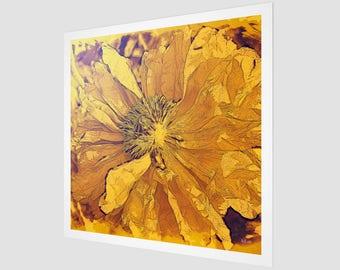 Sun - Poppy Series No.5 Fine Art Print