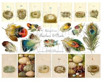 FEATHERS NESTS digital collage sheet, vintage images Victorian art, vintage birds eggs, antique cards, nature woodland ephemera, DOWNLOAD