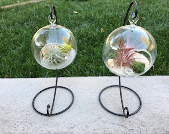 Hanging glass globe Terrarium with Air Plant, KIT to make terrarium, DIY kit to make your own terrarium, air plants, terrarium