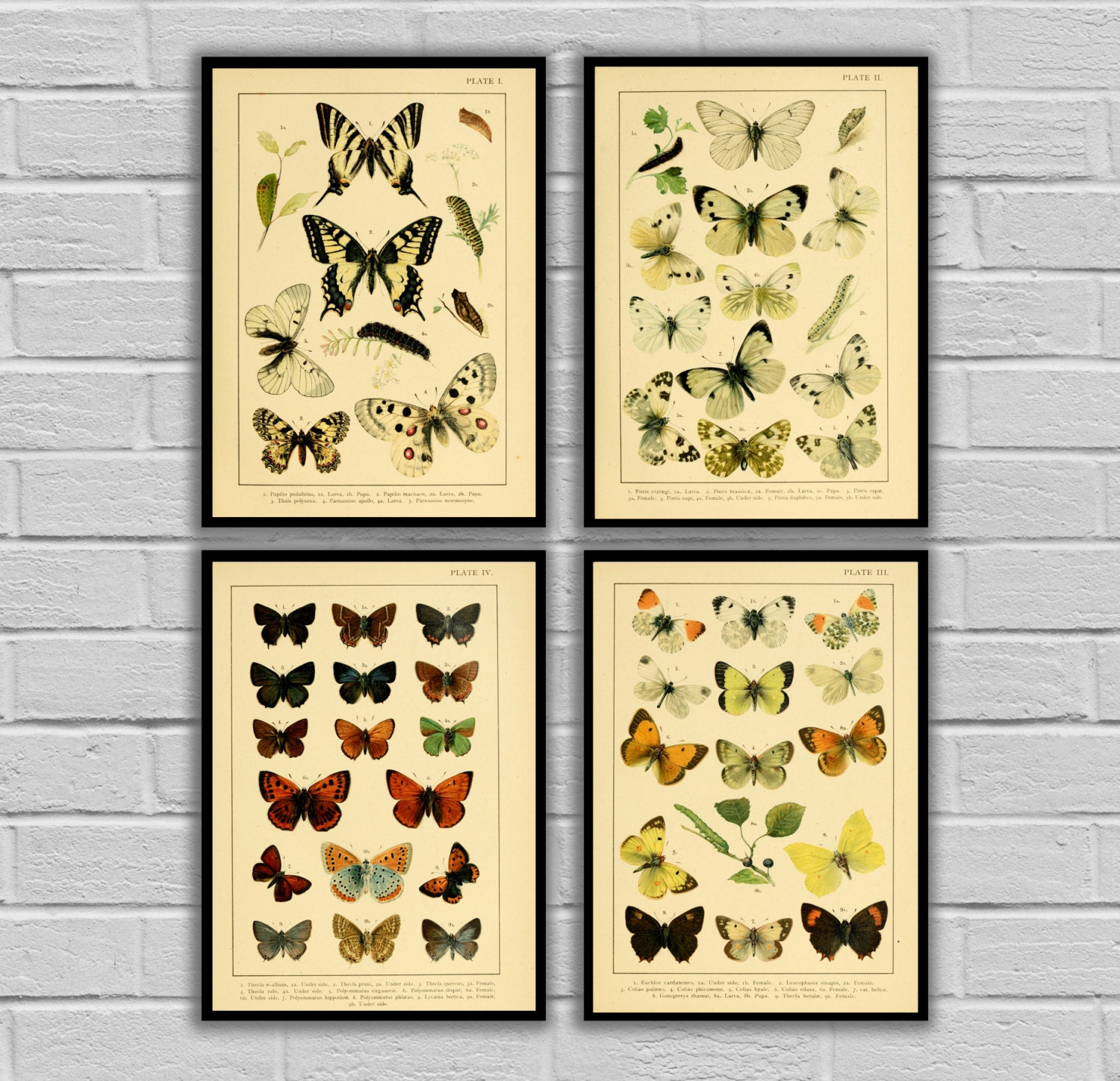 Vintage Butterflies - Set of 4 - Print or Canvas - Vintage Butterfly ...