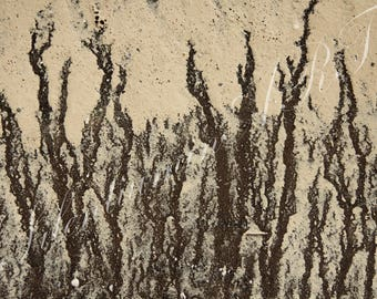 Roots in the Sky /  Artistic sea pattern / Decorative, abstract, interior, gift photography / Printed on Aluminium Dibond