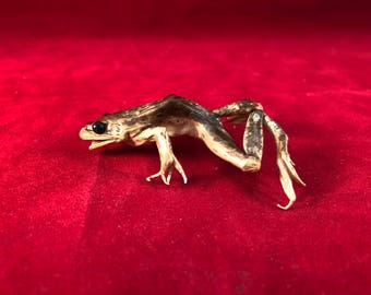 item #11  Frog-Grass Frog or Northern Leopard Frog-real/pond/reptile-tadpole
