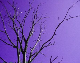 Spooky Tree Photo 5x7 Signed Print Purple Sky Wall Art