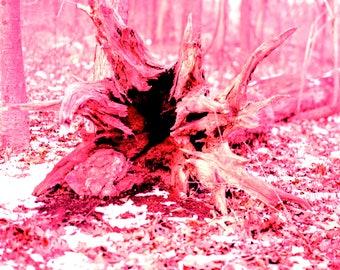 24x36 Tree Stump Poster
