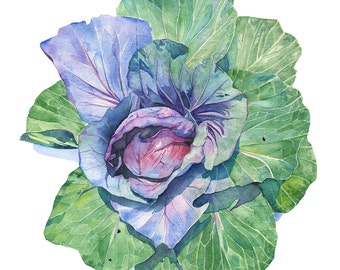 Cabbage print, Cabbage watercolour, cabbage painting, vegetable watercolour, A3 size, C15616, Farm to Table wall art print, kitchen decor