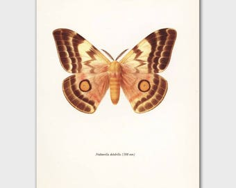 """Butterfly Illustration (Monochrome Art, Golden Yellow Wall Decor) Vintage Butterfly Print --- """"Nocturnal African Butterfly"""" 32-2"""