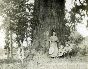 vintage photo 1914 Virginia Bruce with Children by Giant Redwood Tree