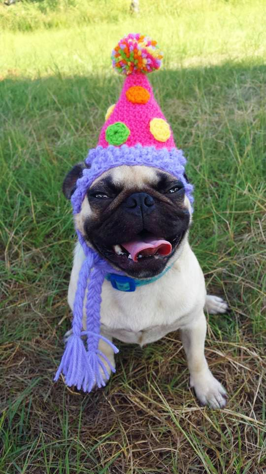 birthday party dog hat costume cats and small dogs the