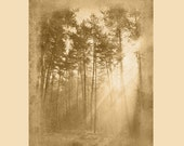 Sun Rays in Tree - Woods ...