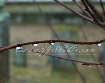 Water Drops on Branch