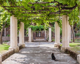 Solace in Santa Chiara
