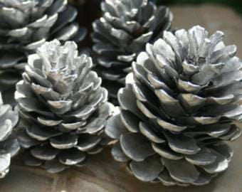 SILVER Pine Cones  Large 1 Dozen Ponderosa Pine Christmas Decor
