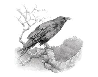 The Raven 8.5x11 Signed Print with special gift