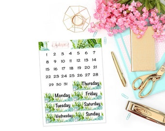 Succulents Collection Date Covers || 130+ Planner Stickers
