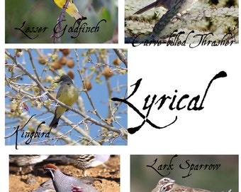 Lyrical Set Of Five Printable Gray Scale Backyard Bird Coloring Pages