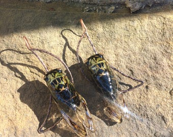 Cicada Moon Earrings, Real Cicadas, Resin Preserved, Dog Day Cicada, Bug Earrings, Jewelry Insect, Hammered Copper, Crescent Moon, Lunar