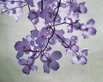 Lavendel Wandkunst, floral Ast, Kinderzimmer Baby Mädchen Zimmer Schlafzimmer Wand-Dekor, Badezimmer-Wand-Kunst-Fotografie Druck 12 x 12, 18 x 24 grau Salbei