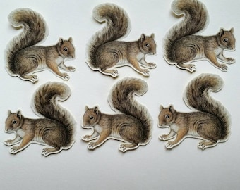 6 x Grey Squirrels stickers. Snail mail hobonichi midori planner journal decorations. Ephemera.