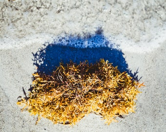 Photo Art Print - Washed Ashore in Yellow