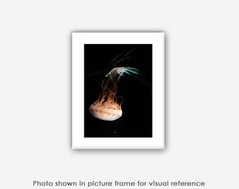White Sea Nettle Jellyfish 5x7 Photograph, Blank Photo Card, Art, Blank Photography Cards, Card Sets, Sea Creature