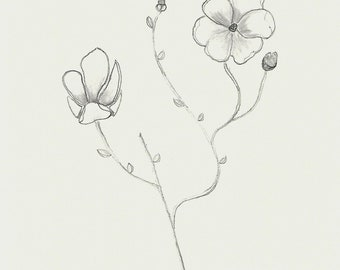 Magnolia Flowers - Pencil Drawing