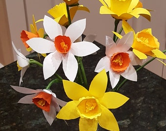 one single stem of paper daffodils narcissus jonquils spring flowers