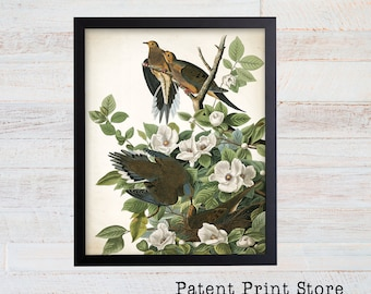 James Audubon Carolina Pigeon Art Print. Bird Print. Audubon Prints. Bedroom Art. Bird Artwork. Bird Print. Bird Art Print. Audubon Bird Art