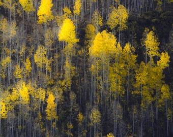 Aspen trees fall photo, aspen trees Colorado art, fall tree art, autumn trees photo, fall decor, rustic wall decor, fall art | Far and Away