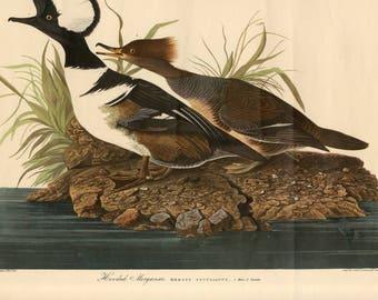 Audobon Bird Prints (4)