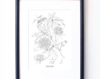 Botanical Illustration A4 Giclee Print - Passion Flower