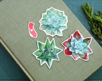 Succulents Native California Dudleya: Three Vinyl Stickers