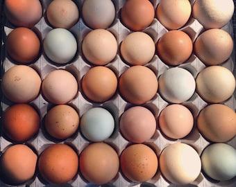 Egg Print, 8x8