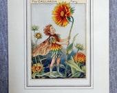 Gaillardia Flower Fairy V...