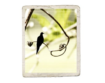 Bird Art Nature Photograph Dove Song Silhouette Green Yellow Heart Vintage Style Print