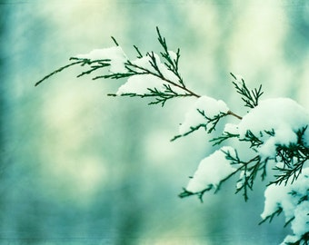 """Winter Photography - turquoise mint green snow branch nature teal print white branches botanical wall art photograph, """"Winter Wonderland"""""""