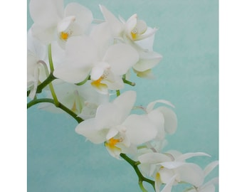 White Orchid Print, Flower Photography, White Mint Decor,  Floral Art Print, Nursery Art, Bedroom Art Print