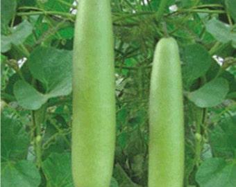 Long Bottle Gourd 30 seeds 10 seeds heirloom Thai vegetable
