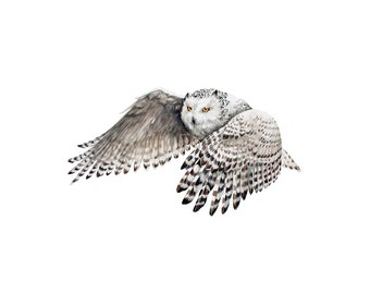 Snowy Owl in flight - archival quality print