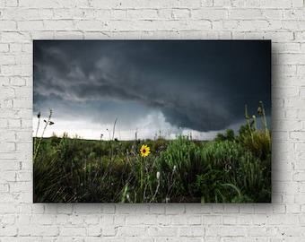 Sunflower Canvas, Sunflower Storm, Large Canvas, Wildflower Photo, Small Canvas, Wildflower Canvas, Texas Canvas, Texas Picture