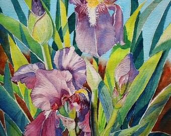 Iris Lily II - Purple